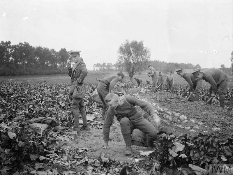 THE FIRST BATTLE OF YPRES, OCTOBER-NOVEMBER 1914 (Q 57231) Soldiers of the 2nd Battalion, Scots Guards digging trenches near Zandvoorde, October 1914. Copyright: © IWM. Original Source: http://www.iwm.org.uk/collections/item/object/205306635