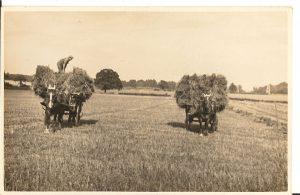 Castlelaw bringing in the harvest
