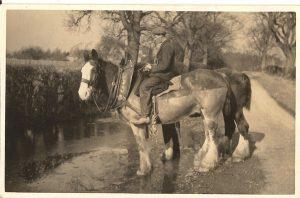 Castlelaw horses