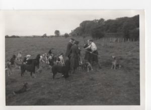 Otter hounds Twizell Station 1956